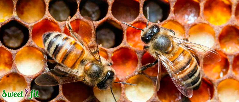Что дает цветочная пыльца организму?
